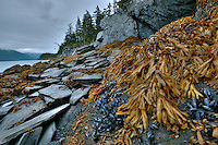 Seaweed and mussels coat rocks along Prince William Sound, Alaska.