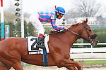 11 20 2010: Stormy's Majesty (NY) and Edgar Prado win the 66th running of the Grade III Discovery Handicap for 3-year olds, at 1 1/8 miles, Aqueduct Racetrack, Jamaica, NY. Trainer Dominic Galluscio. Owners Majesty STud.
