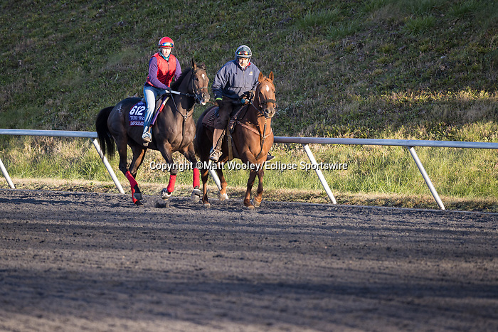 Imprimis, trained by Joseph F. Orseno, exercises in preparation for the Breeders' Cup Turf Sprint at Keeneland 11.03.20.