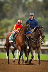 January 09, 2016: Hoppertunity at the San Pasqual Stakes at Santa Anita Park, Arcadia CA. Evers/ESW/CSM