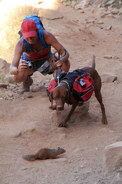 Woman hiker and service dog encounter a gray squirrel, Grand Canyon National Park, northern Arizona. . John offers private photo tours in Grand Canyon National Park and throughout Arizona, Utah and Colorado. Year-round.