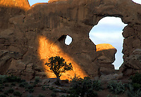 Sunlit Tree at Turret Arch, Arches National Park  #L14