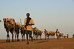 Teams of Muslim Afar and Christian Tigrayans from the Ethiopian Highlands gather daily ten months out of the year to mine the salt and ferry it by camel, mule, and donkey to markets in Ethiopia's mountains and beyond into Sudan. Through the ages, ocean floods in the desert have left behind salt, a commodity prized by the Afar for centuries.