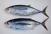 Juvenile yellowfin tunas (a.k.a. shibi in Hawai'i and Japan), consist of two species of tunas: yellowfin tuna (Thunnus albacares), above, and bigeye tuna (Thunnus obesus), bottom; note that bigeye tuna has larger eyes, longer pectoral fins and a more robust body. Image taken in Kona, Big Island.
