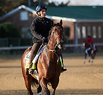 April 19, 2014 Medal Count, trained by Dale Romans, gallops at Churchill Downs.