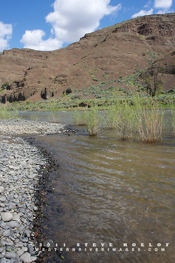 The John Day River flows past cliffs and willow.