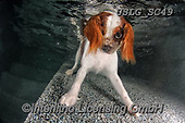 REALISTIC ANIMALS, REALISTISCHE TIERE, ANIMALES REALISTICOS, dogs, paintings+++++SethC_Monty_IMG_5553 v4BOOK,USLGSC49,#A#, EVERYDAY ,underwater dogs,photos,fotos ,Seth