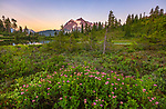 Mount Baker-Snoqualmie National Forest, WA <br /> Pink flowering Subalpine Spirea (Spirea densiflora) on the shoreline of Picture Lake with Mount Shuksan in the distance at sunset