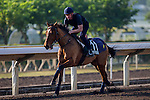 SHA TIN,HONG KONG-DECEMBER 09: One Foot In Heaven,trained by Alain de Royer Dupre,exercises in preparation for the Hong Kong at Sha Tin Racecourse on December 9,2016 in Sha Tin,New Territories,Hong Kong (Photo by Kaz Ishida/Eclipse Sportswire/Getty Images)