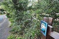 Sign for Bay-Friendly garden with California native plants,  Schino