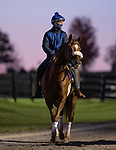 November 3, 2020: Swiss Skydiver, trained by trainer Kenneth G. McPeek, exercises in preparation for the Breeders' Cup Distaff at Keeneland Racetrack in Lexington, Kentucky on November 3, 2020. Alex Evers/Eclipse Sportswire/Breeders Cup