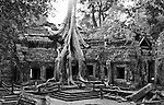 Ta Prohm Temple 01 - Silk-cotton tree roots on the NW side of Gopura III, Ta Prohm Temple, Angkor, Cambodia