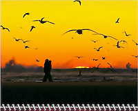 "March of the 2014 Birds of a Feather Calendar. Photo is called ""End of the day beach style"".  Couple walking along sandbar at sunset in Cannon Beach, OR with many seagulls flying overhead in silhouette and sun sinking into the sea with waves crashing."
