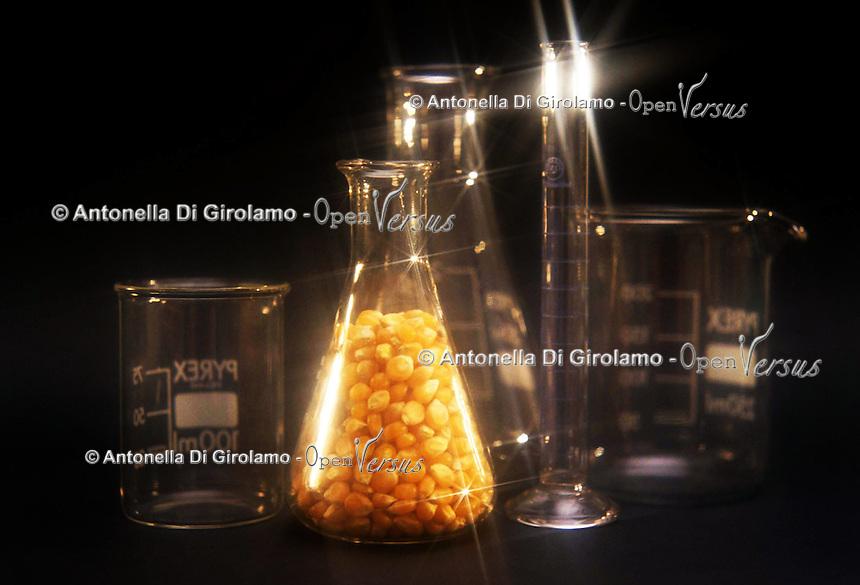 Modificazione genetica sul mais. Genetic modification on corn....