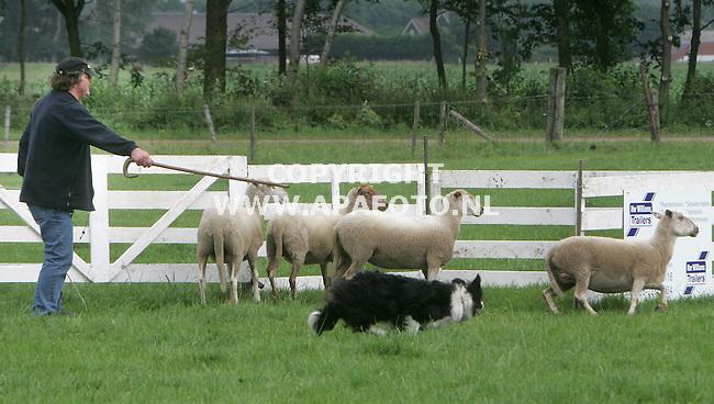 """toldijk 010705 open ned.kampioenschappen schapendrijven<br />het is hard werken voor zowel toon spierings als hond Laika om de schapen in de """"fence """" te krijgen tijdens het kampioenschap.Zeker als èen van de`svchapen besluit om niet naar binnen te gaan.Dit kostte toon een hoge klasering.<br />Foto frans ypma APA-foto"""