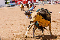 Levi Michael Berends,Maynard,MN, rides the bull Johnny West at 2017 Cheyenne Frontyer days