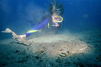 diver and angel shark, Squatina californica, Channel Islands, California, USA, Pacific Ocean