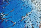 Jardin de corail à Moindou