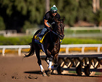 OCT 25: Breeders' Cup Distaff entrant Elate, trained by William I. Mott, gallops at Santa Anita Park in Arcadia, California on Oct 25, 2019. Evers/Eclipse Sportswire/Breeders' Cup