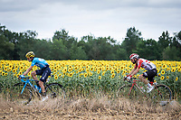 Mikel Landa (ESP/Movistar) and Thomas De Gendt (BEL/Lotto Soudal) riding along a sunflowers field. <br /> <br /> Stage 12: Toulouse to Bagnères-de-Bigorre (209km)<br /> 106th Tour de France 2019 (2.UWT)<br /> <br /> ©kramon