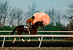 October 31, 2020: Scenes from morning workouts as the Halloween Blue Moon sets in the background as horses prepare for the 2020 Breeders' Cup at Keeneland Racetrack in Lexington, Kentucky on October 31, 2020. Scott Serio/Eclipse Sportswire/Breeders Cup/CSM