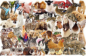 Kim, ANIMALS, REALISTISCHE TIERE, ANIMALES REALISTICOS, fondless, photos,+Pets montage jigsaw,++++,GBJBWP17285,#a#, EVERYDAY