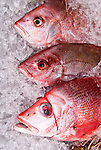 Fresh Fish 07 - Pink snapper on ice