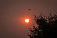 Shortly before sunset the smokey haze from wildfires in the region mute the sun's brightness and turn the sky red.