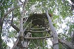 Tree Hut