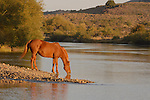 A HORSE TAKING A DRINK