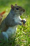 Squirrel Filibuster, US Capitol, Washington DC