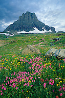 Lewis monkeyflower and arnica<br />