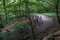 peloton U-turning in the forest<br /> <br /> Ster ZLM Tour (2.1)<br /> Stage 4: Hotel Verviers > La Gileppe (Jalhay)(190km)