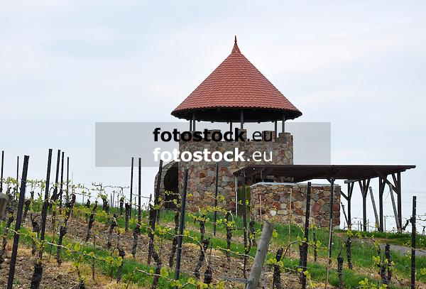 Weinbergsturm von Spiesheim