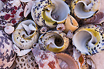 Shell collection on Ambergris Cay Island, Turks and Caicos Islands