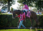 TORONTO, ON - September 16: War of Will #8 before the Summer Stakes at Woodbine Racetrack in Toronto, ON (Photo by Sophie Shore/Eclipse Sportswire/Getty Images)