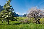 Deutschland, Bayern, Oberbayern, Chiemgau, Inzell Ortsteil Einsiedl: Fruehling im Chiemgau | Germany, Upper Bavaria, Chiemgau, Inzell district Einsiedl: springtime scenery