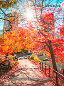 Assaf, LANDSCAPES, LANDSCHAFTEN, PAISAJES, photos,+Capital Cities, Central Park, City, Color, Colorful, Colour Image, Greenery, Lake, Lens Flare, Lower Manhattan, Manhattan, Ne+w York, Outdoors, Park, Path, Pathway, Photography, Pond, Spring, Sun, Sun Beam, Sun Beams,Sun Flare, Sun Rays, Sunlight, Sun+shine, Tree, Trees, Turtle Pond, Water,Capital Cities, Central Park, City, Color, Colorful, Colour Image, Greenery, Lake, Len+s Flare, Lower Manhattan, Manhattan, New York, Outdoors, Park, Path, Pathway, Photography, Pond, Spring, Sun, Sun Beam, Sun B+,GBAFAF20131119,#l#, EVERYDAY