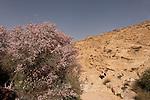 T-092 Almond Tree in the Negev Desert
