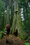 Woman standing beside a tall ancient Douglas fir tree in Cathedral grove forest of MacMillan Provincial Park, Vancouver Island, British Columbia, Canada Image © MaximImages, License at https://www.maximimages.com