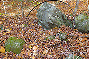 Remnants of the abandoned Thornton Gore settlement in Thornton, New Hampshire. Thornton Gore was the site an old hill farming community that was abandoned during the 19th century. This artifact is likely a flat steel tire from a wooden wagon wheel. The removal of historic artifacts from federal lands without a permit is a violation of federal law.