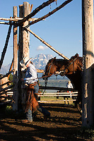 Wrangler leads horses while working at Triangle X Ranch in Grand Teton National Park