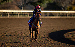 November 4, 2020: Cayenne Pepper, trained by trainer Mrs. John Harrington, exercises in preparation for the Breeders' Cup Filly & Mare Turf at t Keeneland Racetrack in Lexington, Kentucky on November 4, 2020. Alex Evers/Eclipse Sportswire/Breeders Cup