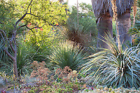 Morning light in drought tolerant California succulent garden beds and borders - Ruth Bancroft Garden Conservancy, Walnut Creek, California