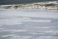 Aerial of Aliy Zirkle on Sea Ice Arriving at Koyuk