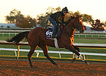 Leinster, trained by trainer George R. Arnold II, exercises in preparation for the Breeders' Cup Turf Sprint at Keeneland Racetrack in Lexington, Kentucky on November 4, 2020.
