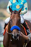 SEP 27,2014:American Pharoah,ridden by Victor Espinoza,wins FrontRunner Stakes at Santa Anita Park in Arcadia,CA. Kazushi Ishida/ESW/CSM
