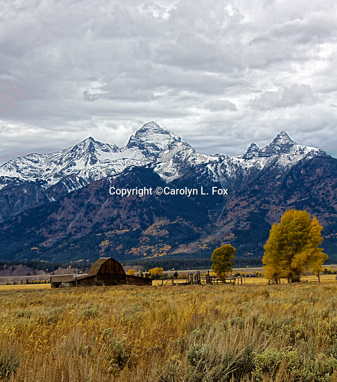 Old barn stands in front of the Teton Mountain Range in Jackson Hole, Wyoming.