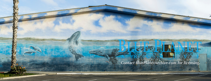 whale mural painting at Oceanside Pier