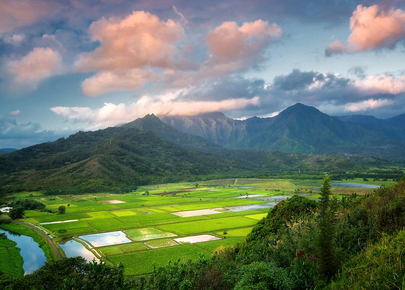 Taro fields near Hanalei, Kauai, Hawaii. Hanalei National Wildlife Refuge.